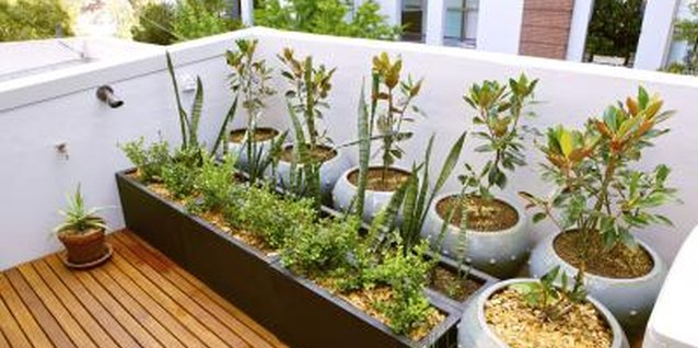 Roof gardens receive high levels of solar radiation.