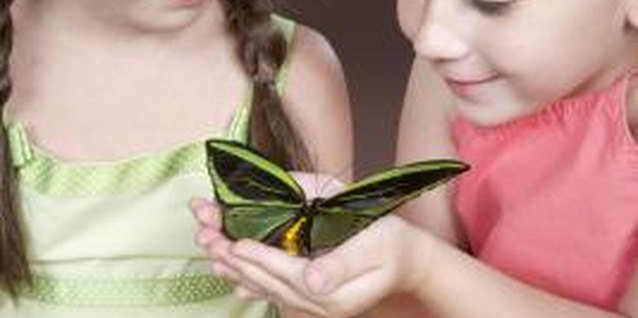 Insects and Bugs Preschool Activities