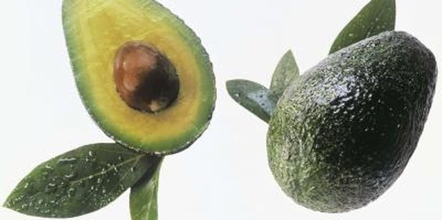 Curled leaves on your avocado tree indicate the plant is overwatered.