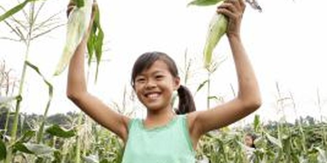 How to Plant Sweet Corn in Hills
