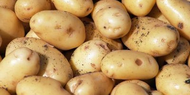 Potatoes grown in straw are resistant to pests and diseases that reside in soil.