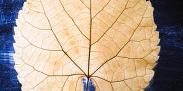 A simple leaf is a perfect example of symmetry.