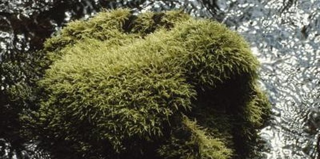 Moss grows on any surface in the right conditions.