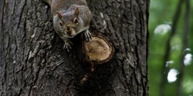 Squirrels are intelligent daredevils, and they love to solve problems.
