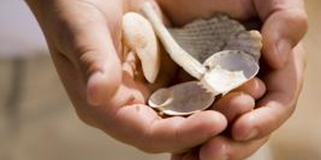 Kids' Crafts With Seashells