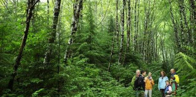 Enjoy a family hike to learn about nature.