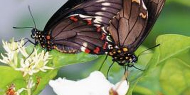 Butterflies are one of the world's most beautiful insects.