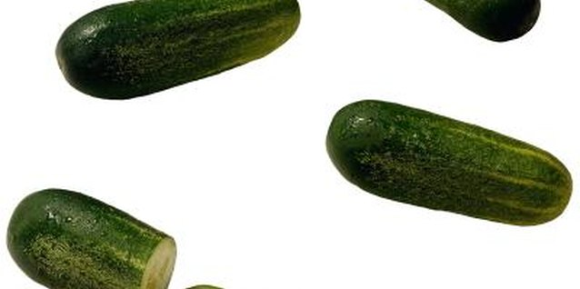 Pickling cucumbers are smaller than slicers, making them ideal for upside down planters.