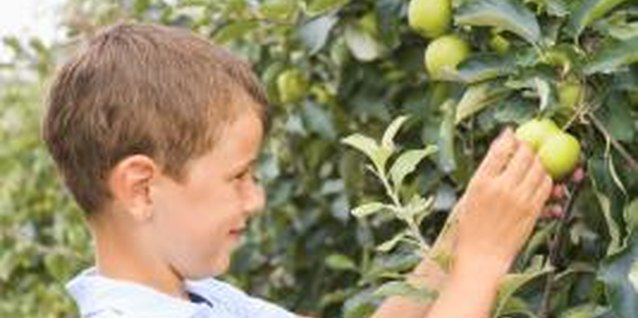 Keep fruit trees vigorous and healthy to prevent pest problems.