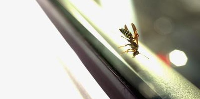 Wasps are pesky bugs that need to be eliminated if they invade your home.