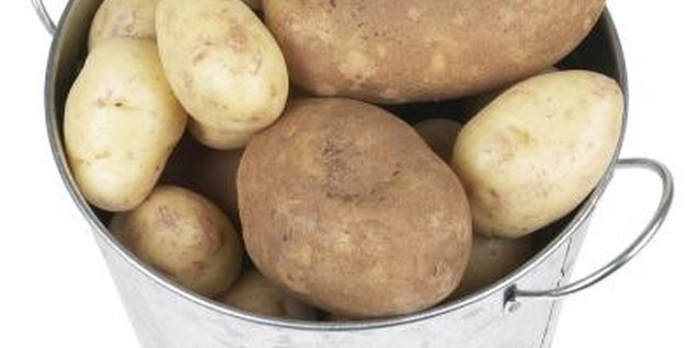 Russet potatoes produce large tubers with a uniform shape.