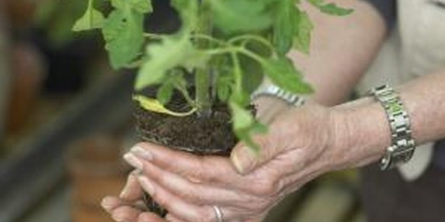 Insure healthy vegetable plant growth with a soilless potting mix.
