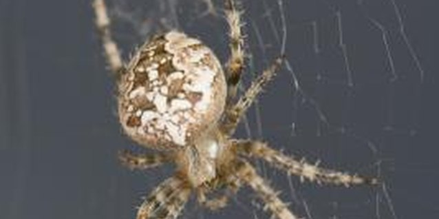 Diatomaceous Earth as a Pesticide for Spiders