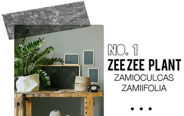 Zee Zee Plant