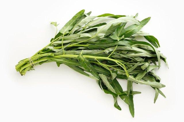 chinese morning glory vegetable on white background