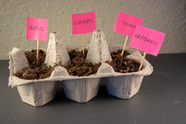 an image of an herb garden made from an egg carton