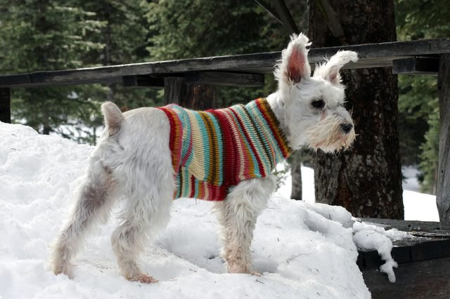Turn an old sweater into an adorable dog sweater