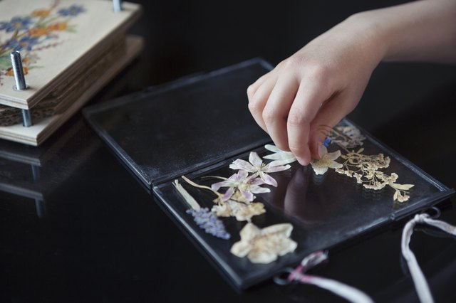 Child (6-7) arranging pressed wildflowers onto a glass frame
