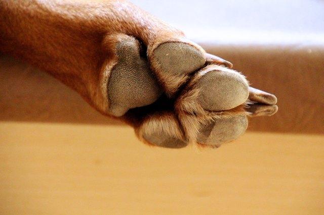 Close-Up Of Dog Paw