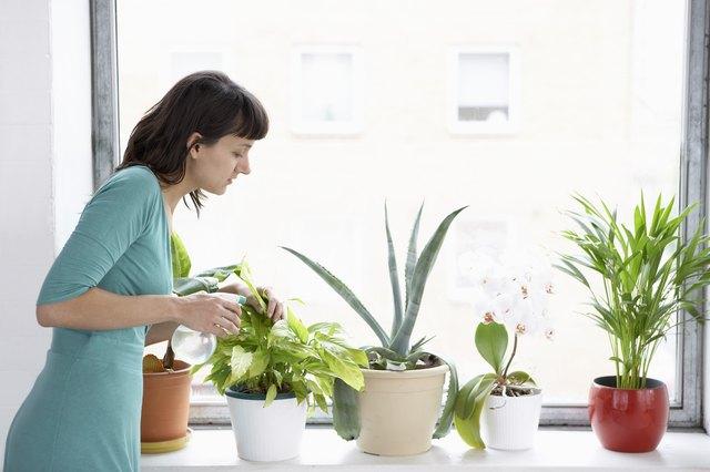 Businesswoman Sprays Plants In Flowerpots