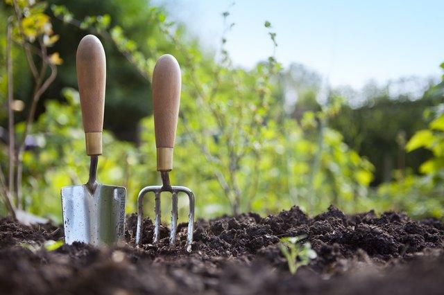 Gardening Hand Trowel and Fork Standing in Garden Soil