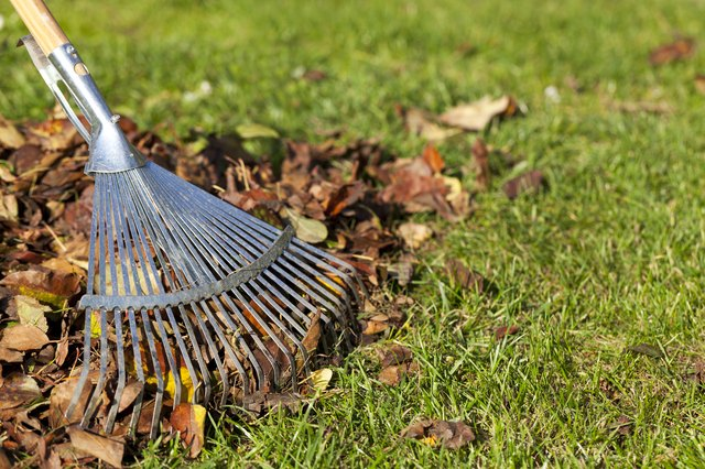 Rake, Leaves on Grass in Garden