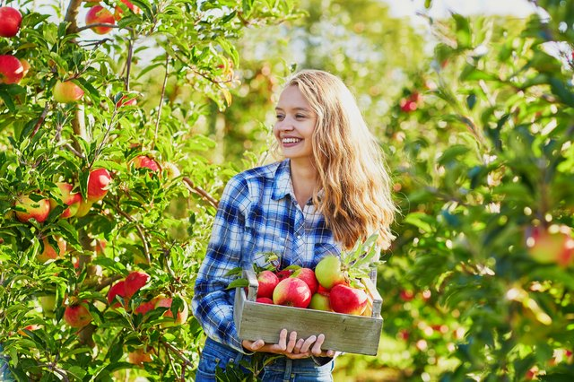 Young woman picking ripe organic apples