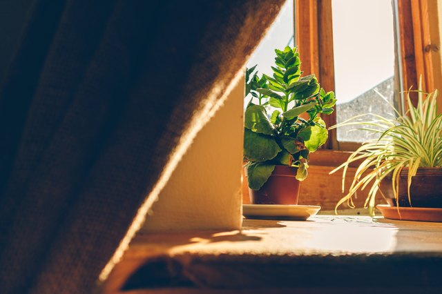 Warm atmosphere of window with warm sunlight and small plant pots