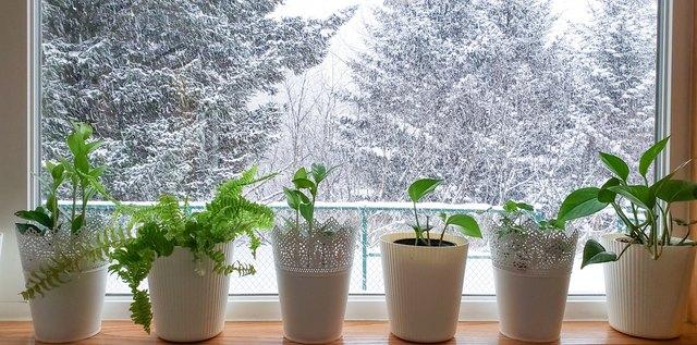 Houseplants on windowsill