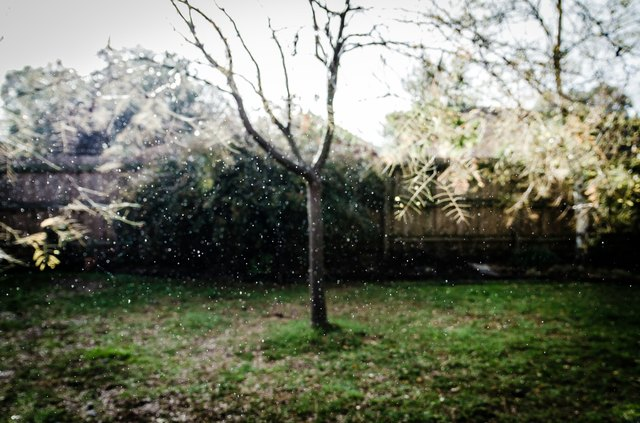 Bare Tree In Backyard