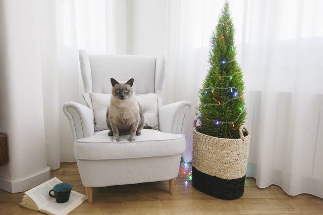 Cat sitting on armchair beside Christmas tree at home