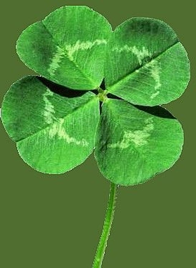 How To Find A Four Leaf Clover Ehow