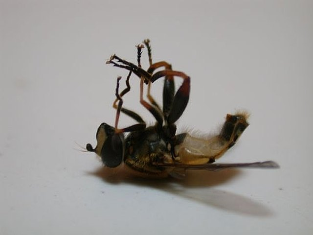 Adding An Electric Bug Zer Is Also Effective And Will Kill All Manner Of Flying Insects As Well Flies
