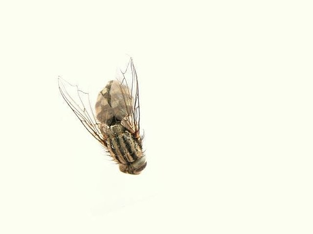 Stop Flies Entering Your House