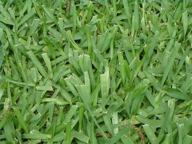 How To Kill Bermuda Grass In St Augustine Grass Ehow