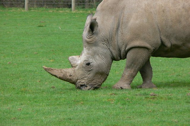 What Kinds of Plants Do Rhinos Eat? | eHow