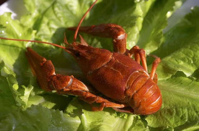 How to Transport Live Crawfish | eHow