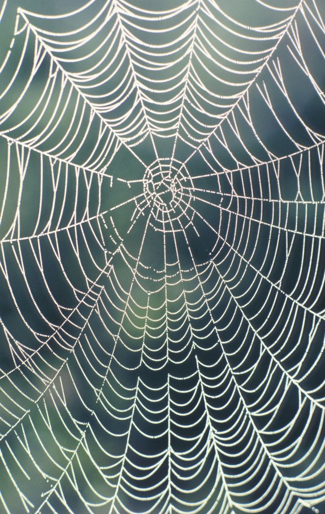 How To Make A Realistic Spider Web Ehow