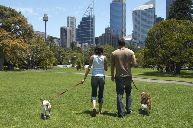Young couple walking dogs in park, rear view