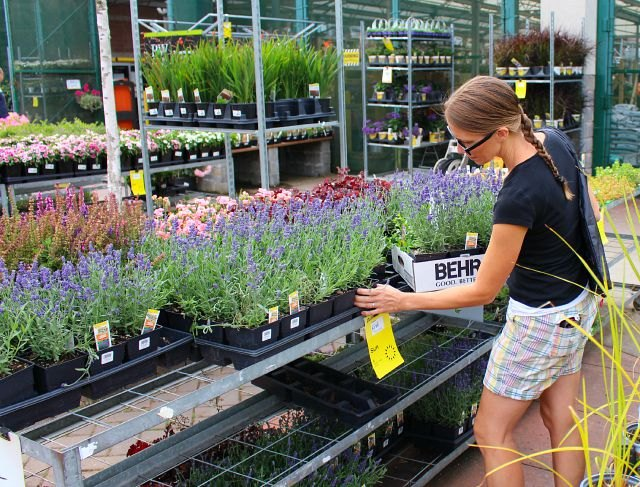 The Best Perennials To Plant In Window Bo