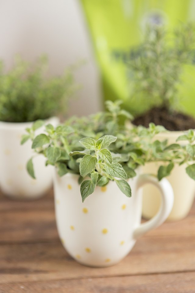 Plant your herbs into the mugs.