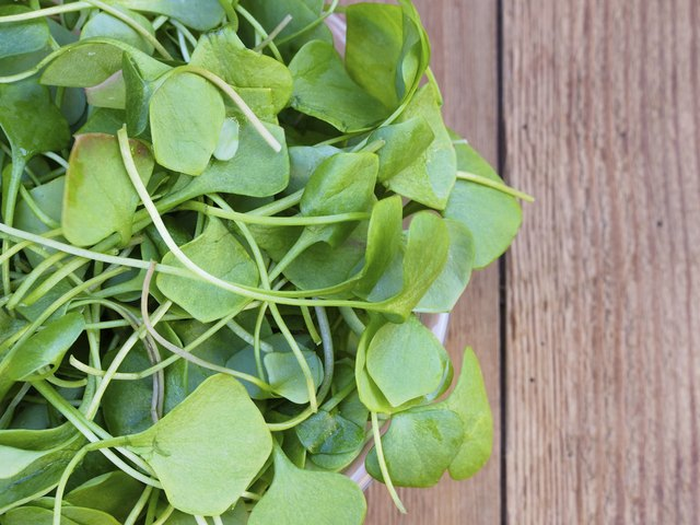 Gram for gram, watercress has the most nutritional value of any fruit or veggie.