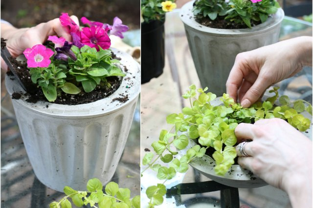 Plant potted flowers directly into the concrete forms