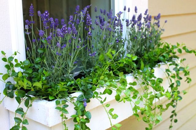 The Best Perennials To Plant In Window Boxes Ehow
