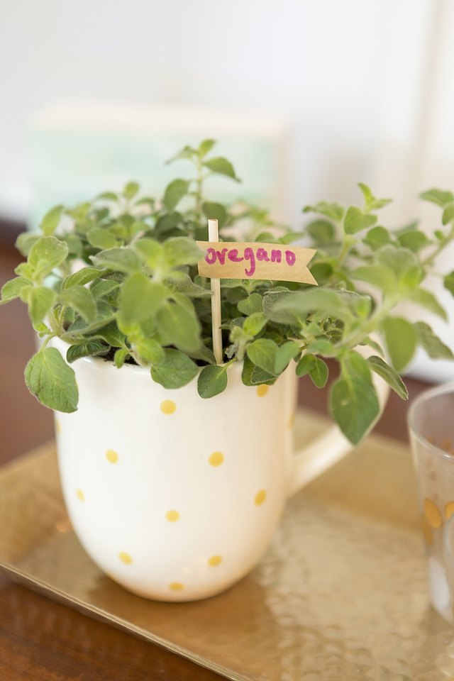 A teacup herb garden can be placed just about anywhere in your home.