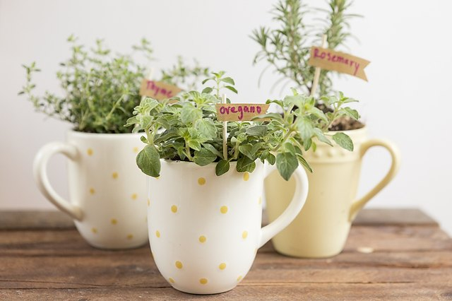 A mug herb garden fits into a large space or small apartment.