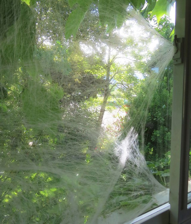 Stretch the webs across a window.