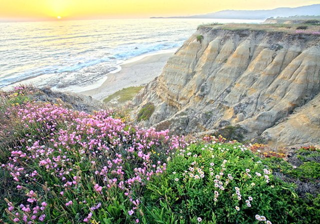 Flowers Decorate A Beach Landscape