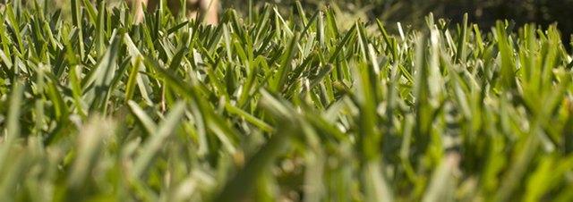 Fertilizer Schedule for St  Augustine Grass   eHow