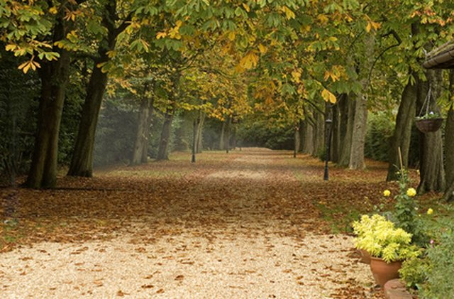 the best trees to line a long gravel driveway ehow